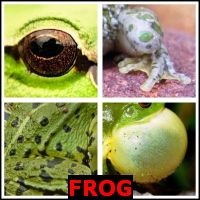 FROG- Whats The Word Answers