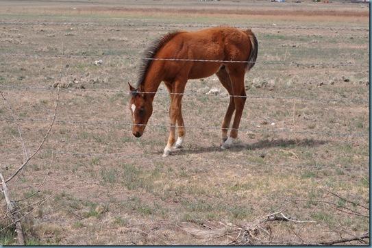 05-09-13 horses 19