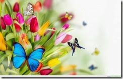 colorful-tulips-flowers-with-butterflies