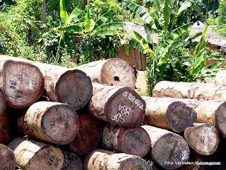 Troncs d'arbres de Sodefor dans l'Equateur, 2004.