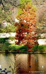 Arboretum 119-001