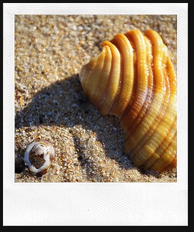 shell4