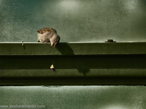 fotos de animais na hora certa desbaratinando  (8)
