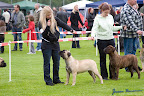 20100513-Bullmastiff-Clubmatch_30884.jpg