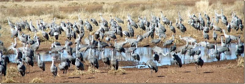 Cranes1 1-19-2012 1-13-06 PM 3599x1230