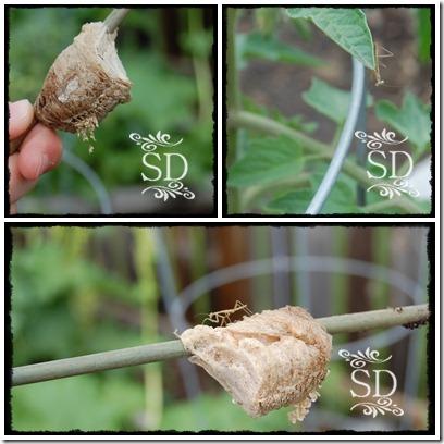 Mantis Collage 1b