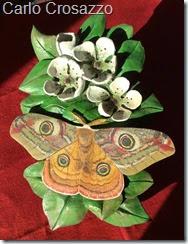 Fiori e farfalle Crosazzo