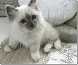 10 -Fotos de gato buscoimagenes (35)