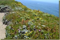 Bodega Head Flowers-3