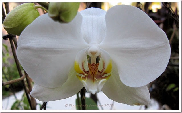 02-03-nancis-orchid2