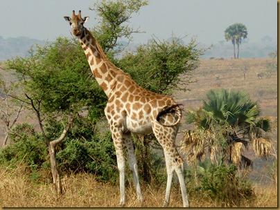 Ziwa, Murchison Falls trip 271