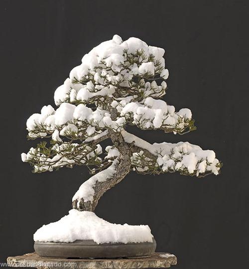 bonsais arvores em miniatura desbaratinando (94)