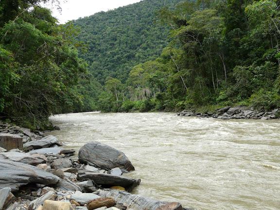 Rio Zongo (alt. 600 m, à l'ouest de Caranavi). Bolivie, 30 janvier 2008. Photo : J. F. Christensen