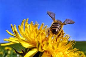 Amazing Pictures of Animals, Photo, Nature, Incredibel, Funny, Zoo, Bee, Insetcs, Anthophila, Alex (16)