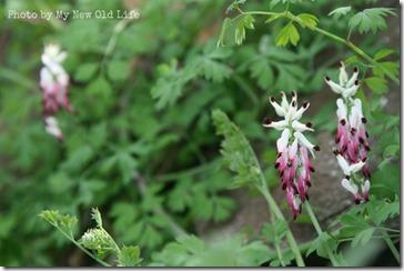 La Selva i fiori 17