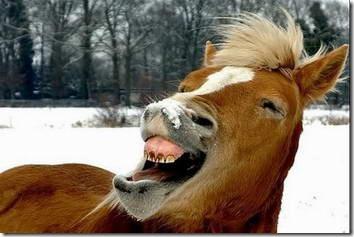fotos animales divertidas patatitasylimones (2)