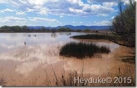 Whitewater Draw Wildlife Area and Lowell, AZ 010