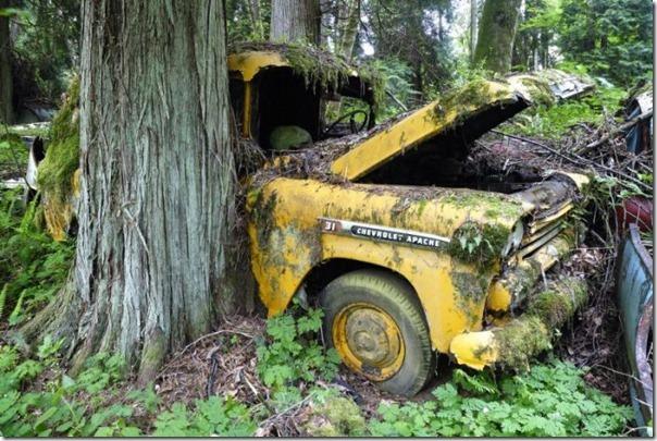 Cemitério de carros na floresta (16)