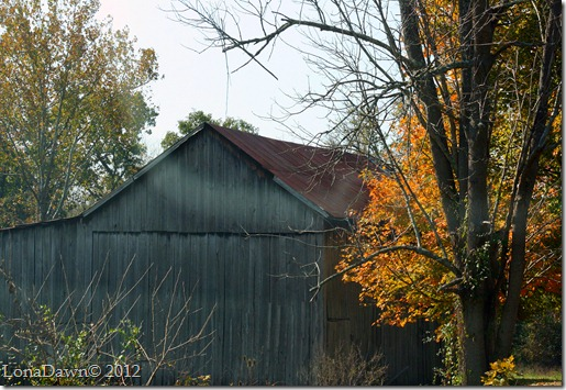 Barn_Gallia_2012