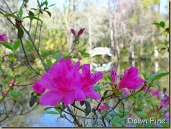 Magnolia Plantation_111