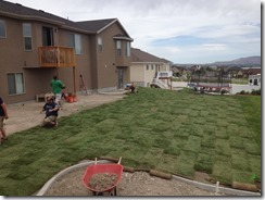 Laying Sod (24)
