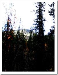 Jag antar ljusning, snart ute ur den mörka skogen, berget där borta är är min räddning upp på fjället.