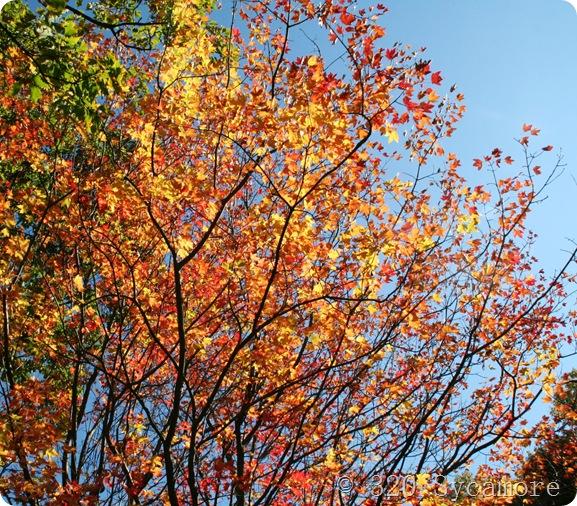 october 2011 053 1