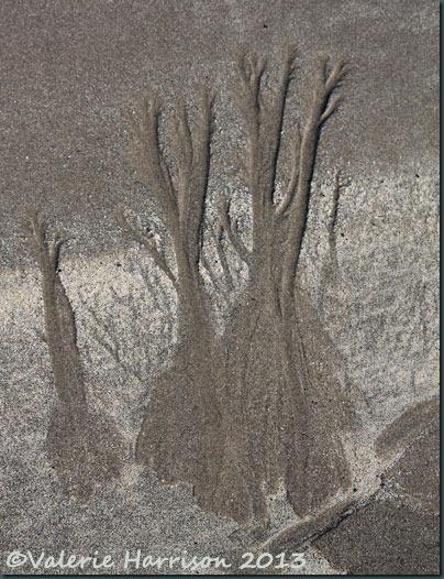 24-sand-trees