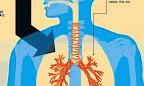 Tuberculose pulmonaire (Ph. static.hsw.com.br)