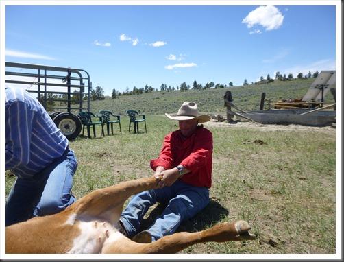 montana 2013 trail 599