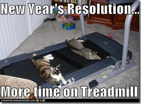 Treadmill Cats