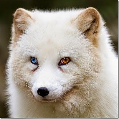 gatos y perros con un ojo diferente cosasdivertidas net (9)