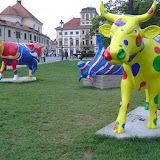 EuropeTripCows