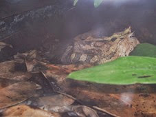 2014.04.21-047 grenouille