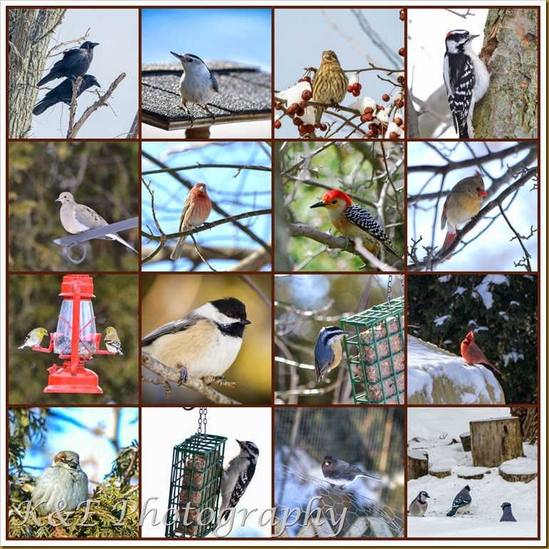 PicMonkey CollageWinter birds