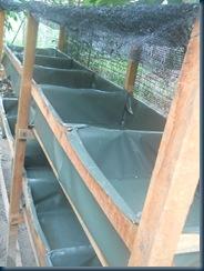 kolamm bertingkat - http://kelisabah.blogspot.com/