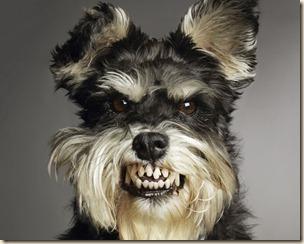 Dog-Scary