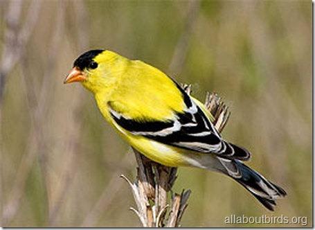 allboutbirds.org