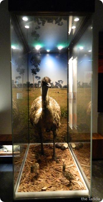 Jurassic Lounge at Australian Museum-  Halloween 2012 (6)