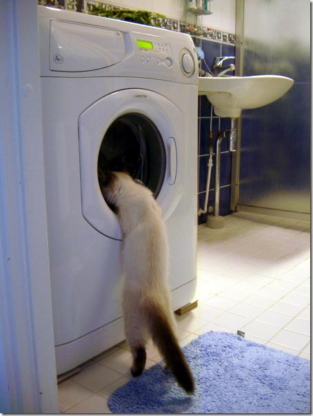 gatos lavadora (1)