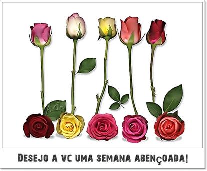 Desejo a você uma semana abençoada Flores e rosas
