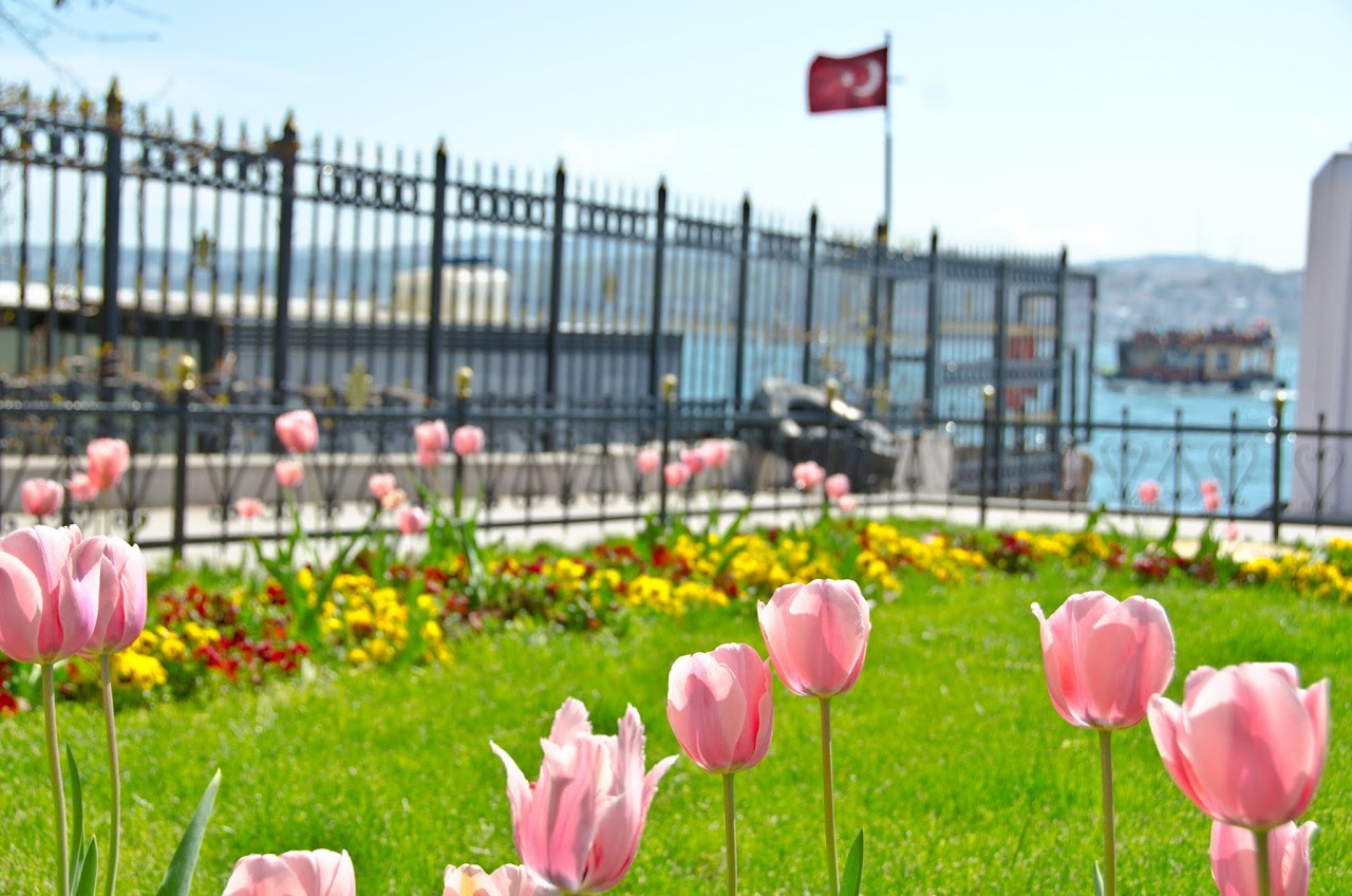 Turkish flag and tulips