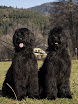 Bonnie & Cheri 5.jpg