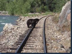 Bear_McCoy_%20(15)