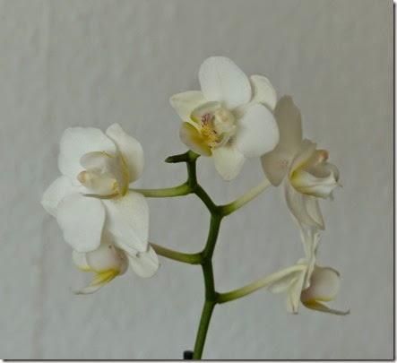2015_02 Orchideen (2)