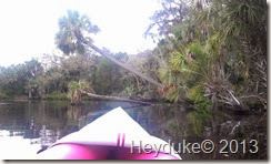 Pellicer Creek Kayaking 010