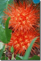flores tropicales (3)