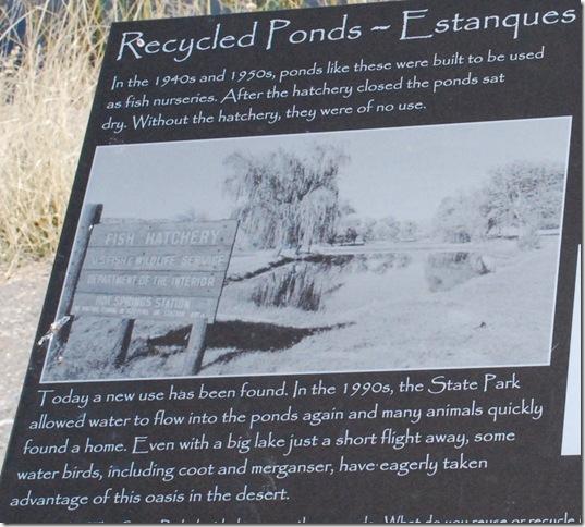 04-19-13 A Elephant Butte Lake Area 054a
