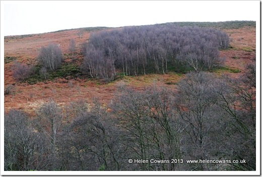Harthope Valley  walk treeson hillside 8