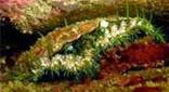 Manche Atlantique tombant rocheux ormeau